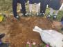 Grade 8 Activity - Preparing the soil
